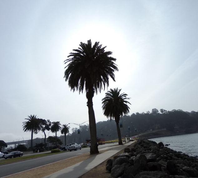 halo palms blog